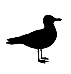 standing seagull silhouette vector image