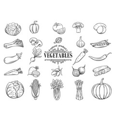 hand drawn vegetables icons set decorative vector image vector image