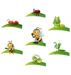 Cartoon insect on leaf collections set vector