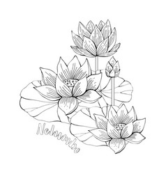 coloring pages with lotus flowers zentangle vector image