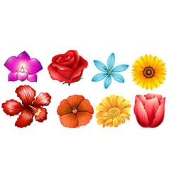 Different kind of flowers vector