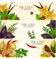 Herbs spices culinary ingredients banners vector