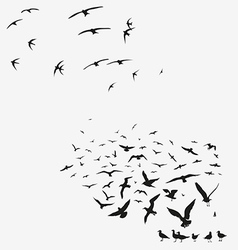 Pack of seagulls and pack of swallows vector