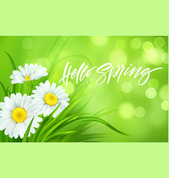 spring background with daisies and fresh green vector image