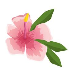 Tropical summer flowers decorative vector