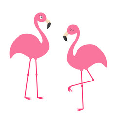 two pink flamingo set exotic tropical bird vector image
