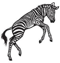 Zebra baby vector