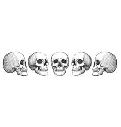 skulls vintage vector image