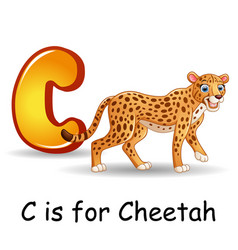 Animals alphabet c is for cheetah vector