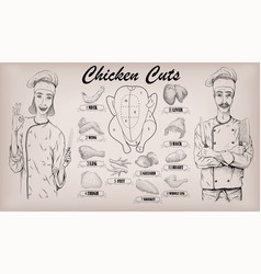 Chicken meat carcass cut parts chops vector