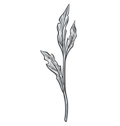 floral summer leaf monochrome sketch outline vector image