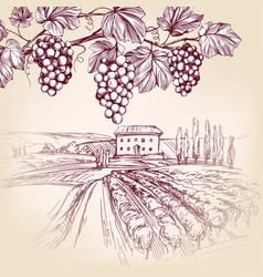 grape vine vineyard grape hand drawn vector image