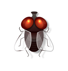 realistic fly retro realistic animal isolated vector image