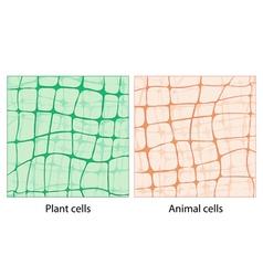 fon cell 3 vector image