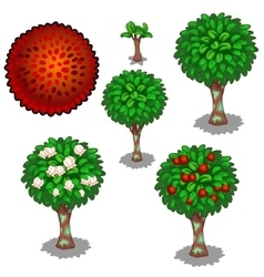 Planting and cultivation of red exotic rambutan vector image vector image