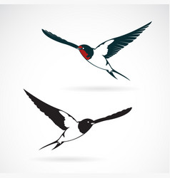 bird swallows design on white background vector image