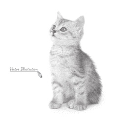 Cat in black and white graphic vector