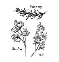 herbs sketch set vector image