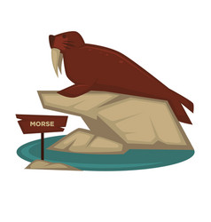 Morse zoo animal and wooden signboard vector