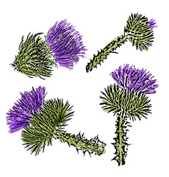 watercolor milk thistle flowers set isolated on vector image