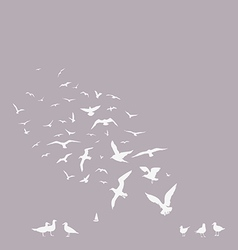 pack of seagulls vector image