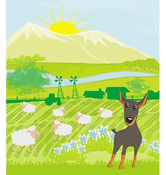 Sheeps and dog vector