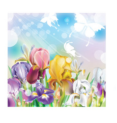 Background with Iris flowers vector image vector image