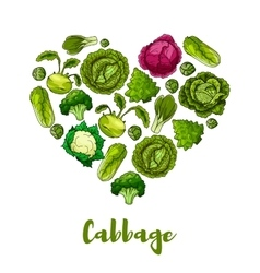 Cabbage vegetable heart shape poster vector