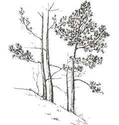 pine trees at hill vector image
