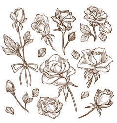 Rose flower bud and stem petas isolated sketches vector