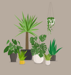 Set green indoor house plants in pots vector