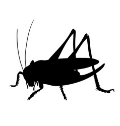 silhouette of grasshopper hand drawn style design vector image