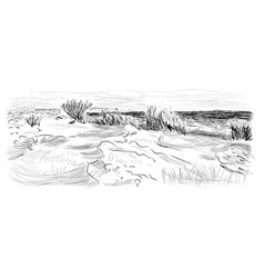 Small sand dunes with grass on seashore vector