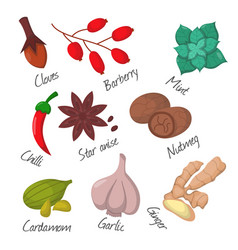 spices condiments and seasoning food herbs vector image