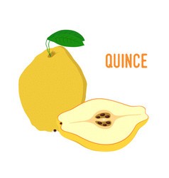 yellow fruit - juicy quince vector image