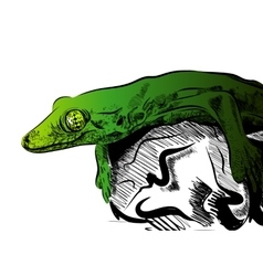 Picture with lizard Graphics on white vector image vector image
