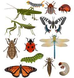 collection insects in colour image vector image