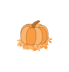 pumpkin on leaves isolated on white background vector image