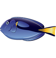 tropical fish paracanthurus hepatus vector image