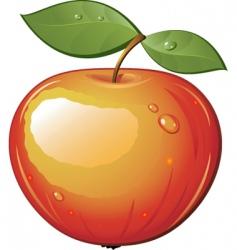 fruit vector image