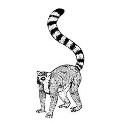 Hand drawn lemur sketch vector