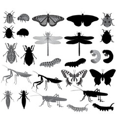 Insects silhouette and black-white vector