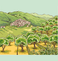 Olive grove vector