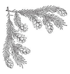 Pine cone corner upper left are used at christmas vector