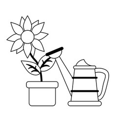 Sunflower in pot and water can in black and white vector