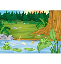 frogs in nature vector image