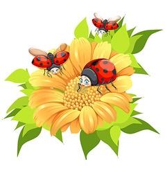 Ladybugs flying around yellow flower vector image