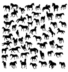 big collection of different horses silhouettes vector image