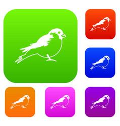 bullfinch set collection vector image