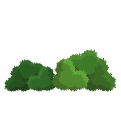 Bushes natural wild image vector